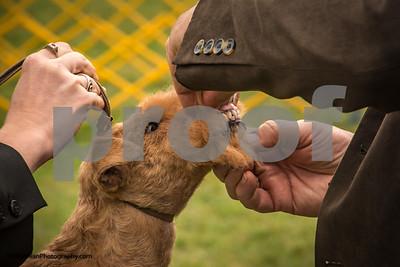 2014-10-04 Ludwig's Corner Dog Show 037-4