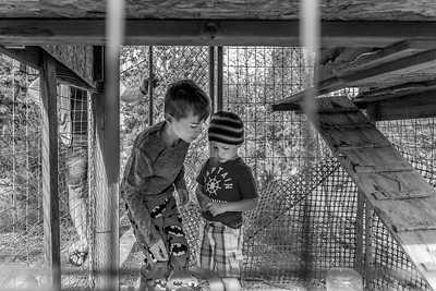 Two boys, brothers, having a discussion in the chicken coop.