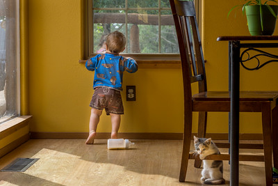 A toddler looks out the window while a kitten plays nearby under a chair.