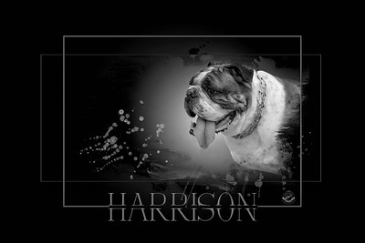 HARRISON PAINTED PET-B&W