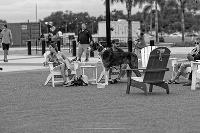 LUPO-Great Dane-Curtis Hixon Park-B&W-11