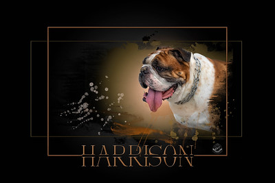 HARRISON PAINTED PET