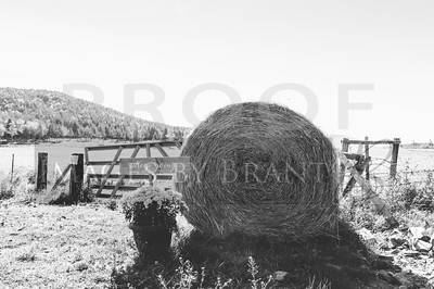 Eatonville_Wedding_photographers_AmyNeil_0005D2C_0685-3