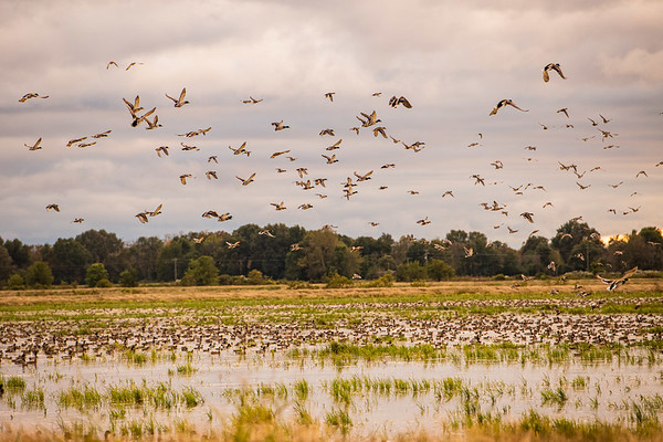 Arkansas Hunting-0003