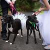 Wedding_0070