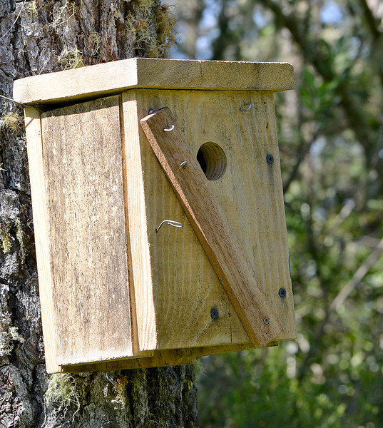 One of Justin and Marisol's golden swallow nest boxes near Villa Pajon