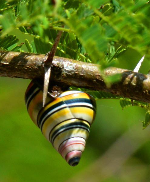 Snail photographed along Sendero en Sueno