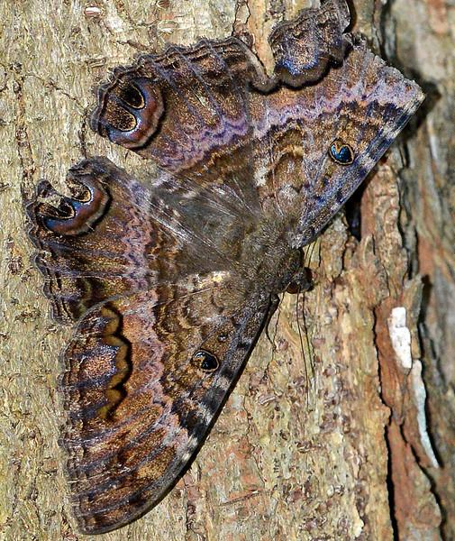 Unidentified butterfly photographed along the Sendero en Sueno