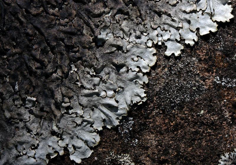 Lichen in Parque Nacional Valle Nuevo
