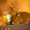 Easter_BT_BehindScenes-017