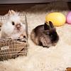 Bunny-3696-bunnies