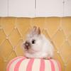Bunny-3173-bunnies