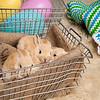 Bunny-2541-Bunnies