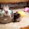 Bunny-3709-bunnies