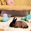 Bunny-2516-Bunnies