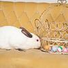 Bunny-2530-Bunnies