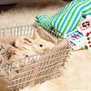 Bunny-2539-Bunnies