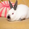 Bunny-2529-Bunnies