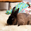 Bunny-2515-Bunnies