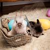 Bunny-3707-bunnies