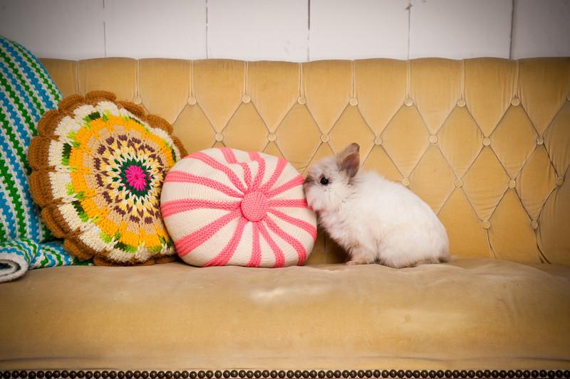 Bunny-3168-bunnies