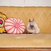 Bunny-3169-bunnies