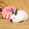 Bunny-2527-Bunnies