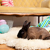 Bunny-2514-Bunnies