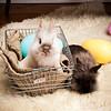 Bunny-3708-bunnies