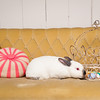 Bunny-2531-Bunnies