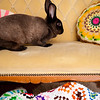 Bunny-2753-Rhyne