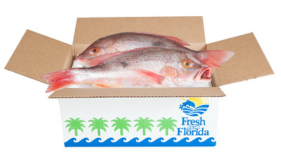 PHK_7090 box fish