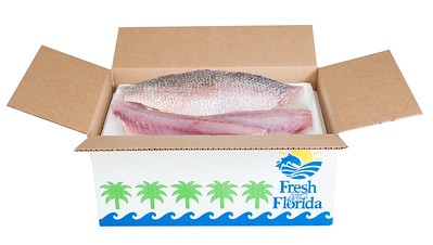 PHK_7090 box fish2