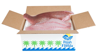 PHK_7090 box fish4