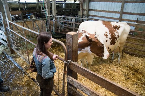 Bennett-Farm-buttercup-008