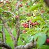 Arboretum-4019