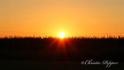 sunset9113cp