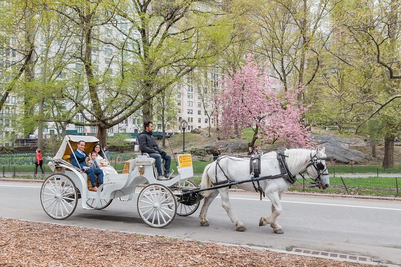 Central Park Wedding - Diana & Allen (20)