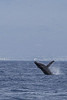 20130316_BSN_Whale_watch-165