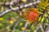 20130607_Enchanting_Gardens-215_6_7