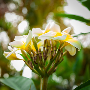20150518_Flowers-15