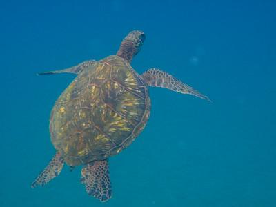 20120907_Kayak_Snorkel-054