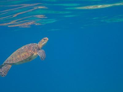 20120907_Kayak_Snorkel-037
