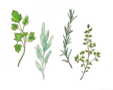 Plant Posse - Herbs