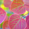 The colors of my Heart