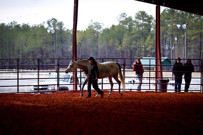 Camden Horse Expo 2011