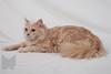 Cat_Calendar-0149