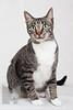 Cat_Calendar-0012