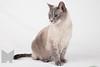 Cat_Calendar-0016