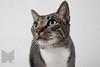 Cat_Calendar-0002